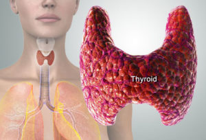 Slow Thyroid made losing weight difficult